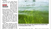 20150707 Korea harald Algal bloom.jpg